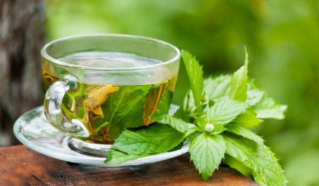 katechiny z zielonej i czarnej herbaty 2