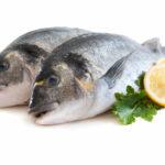 Cała prawda o rybach