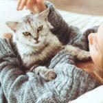 Rasy kotów najlepsze do domu